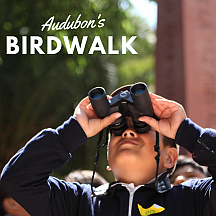 Audubon-Birdwalk