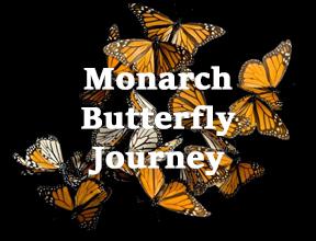 Monarch-Butterfly-Journey