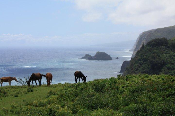 horses-hawaii-1
